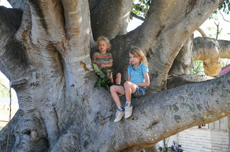 tree-kinderimbaum.jpg