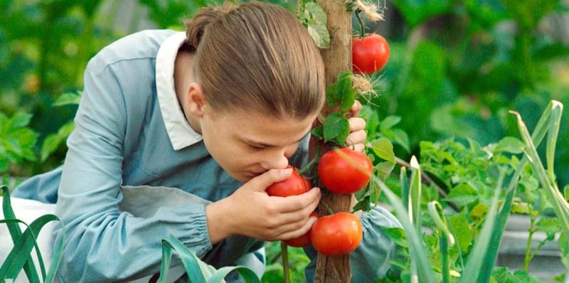 heurtin-tomaten.jpg